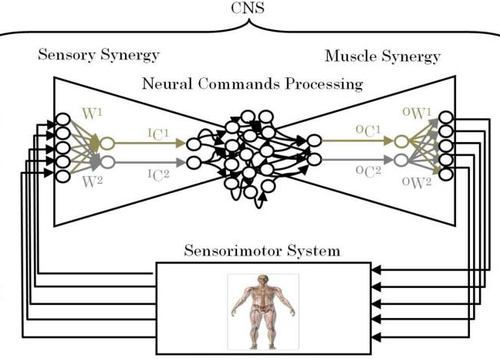 Sensory synergy as environmental input integration