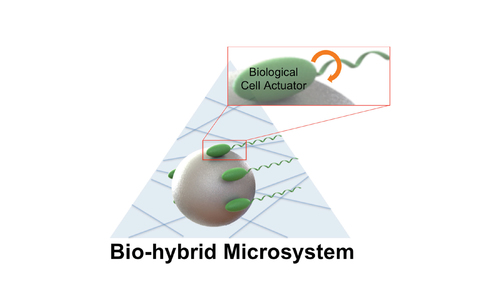 Bio-Hybrid Cell-Based Actuators for Microsystems