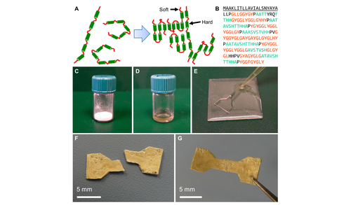 Segmented molecular design of self-healing proteinaceous materials.