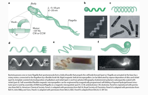 Bioinspired microrobots