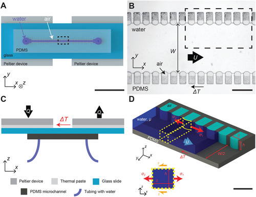 Temperature Gradients Drive Bulk Flow Within Microchannel Lined by Fluid–Fluid Interfaces
