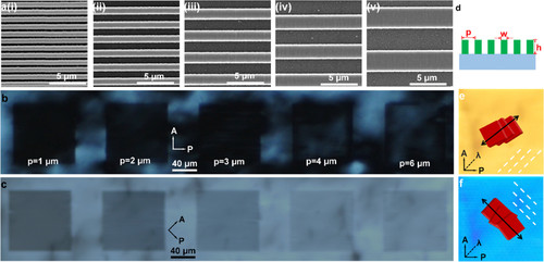 Precise Control of Lyotropic Chromonic Liquid Crystals Alignment through Surface Topography