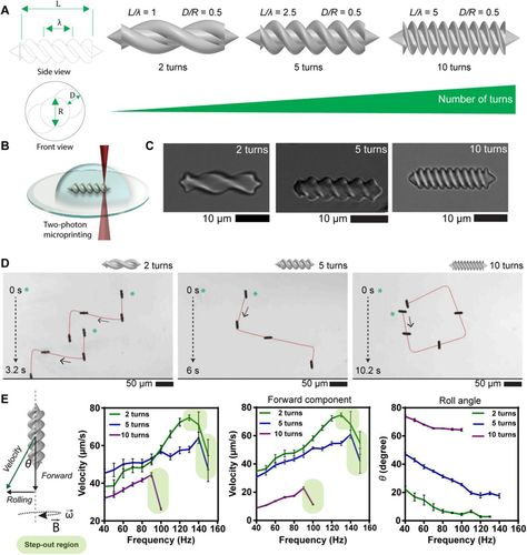 Elucidating the interaction dynamics between microswimmer body and immune system for medical microrobots