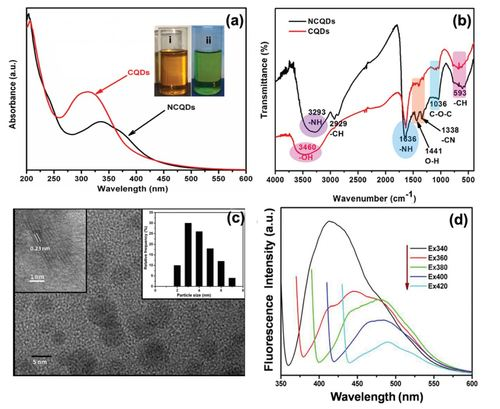 Nitrogen doped carbon quantum dots demonstrate no toxicity under in vitro conditions in a cervical cell line and in vivo in Swiss albino mice