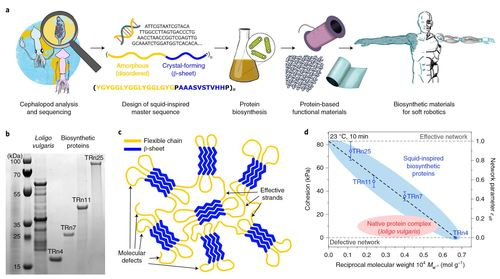 Biosynthetic self-healing materials for soft machines