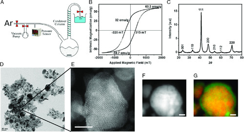3D Microprinting of Iron Platinum Nanoparticle-Based Magnetic Mobile Microrobots