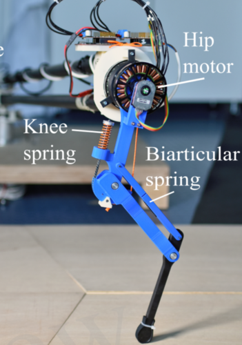 Series Elastic Behavior of Biarticular Muscle-Tendon Structure in a Robotic Leg